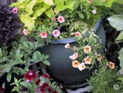 Container with salmon flowered Callibrachoa surrounded by other choice annuals