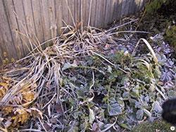 fall frost on perennials