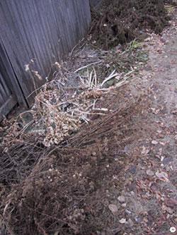 perennials in winter