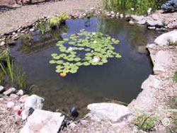 Pond feature