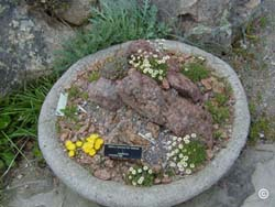 Rock garden design within the container