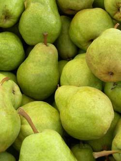 1205 Pears Planttalk Coloradoplanttalk Colorado
