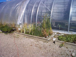 Hobby greenhouse covering