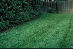 Choosing a lawn grass in Colorado