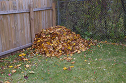 Pile of leaves in corner of lawn