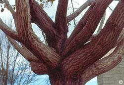 Tree not pruned properly