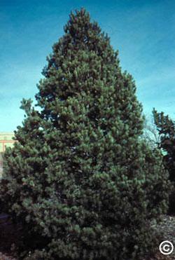 1748 Pi 241 On Planttalk Coloradoplanttalk Colorado