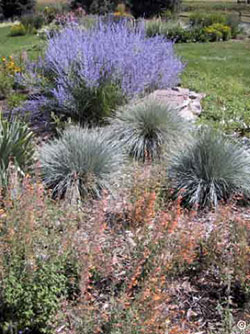 Xeriscape ornamental grasses