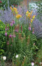 Xeriscape annuals and perennials