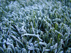 Spring Frost on Turf