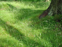 Grow grass under tree